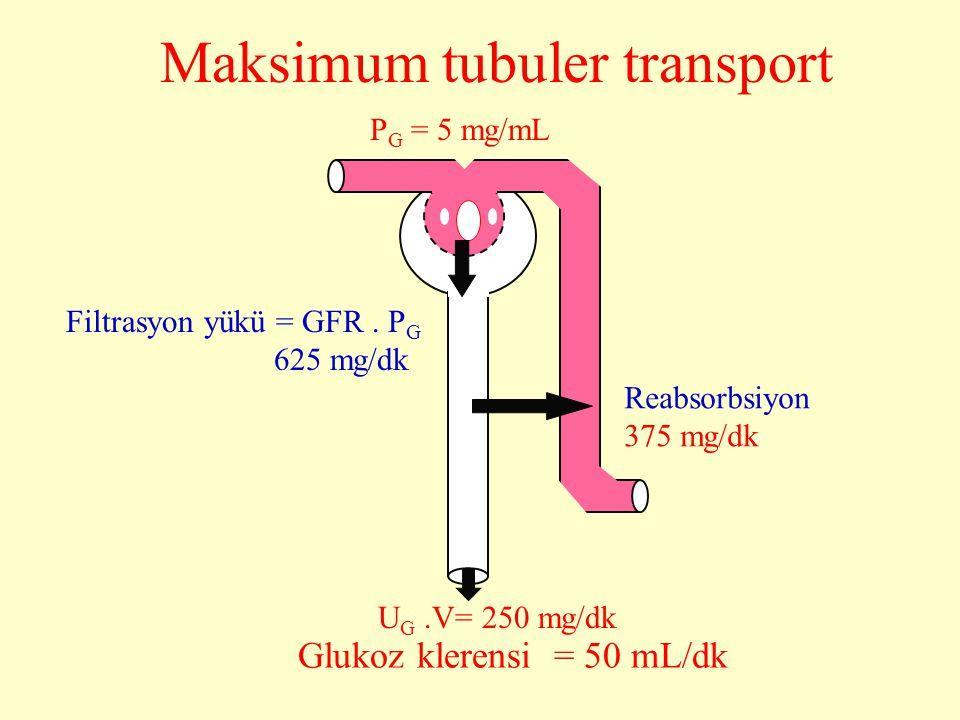 Maksimum tubuler transport