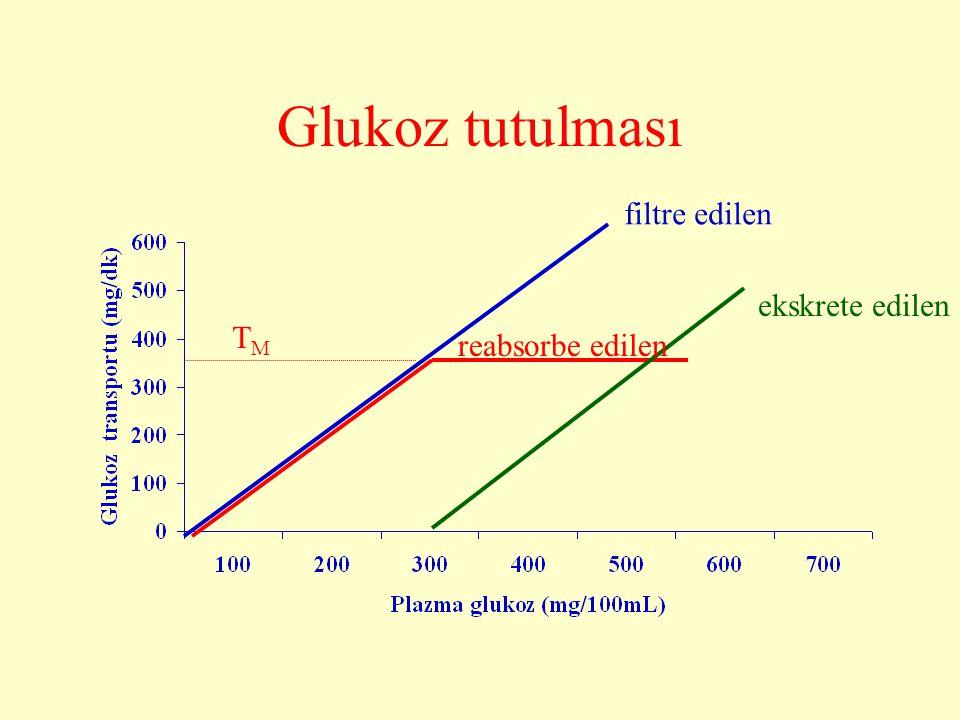 Glukoz tutulması filtre edilen ekskrete edilen TM reabsorbe edilen