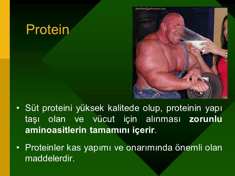 Protein Süt proteini yüksek kalitede olup, proteinin yapı taşı olan ve vücut için alınması zorunlu aminoasitlerin tamamını içerir.