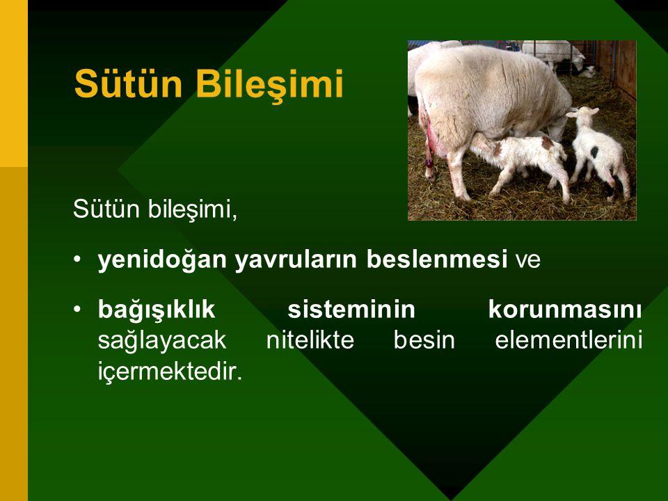 Sütün Bileşimi Sütün bileşimi, yenidoğan yavruların beslenmesi ve