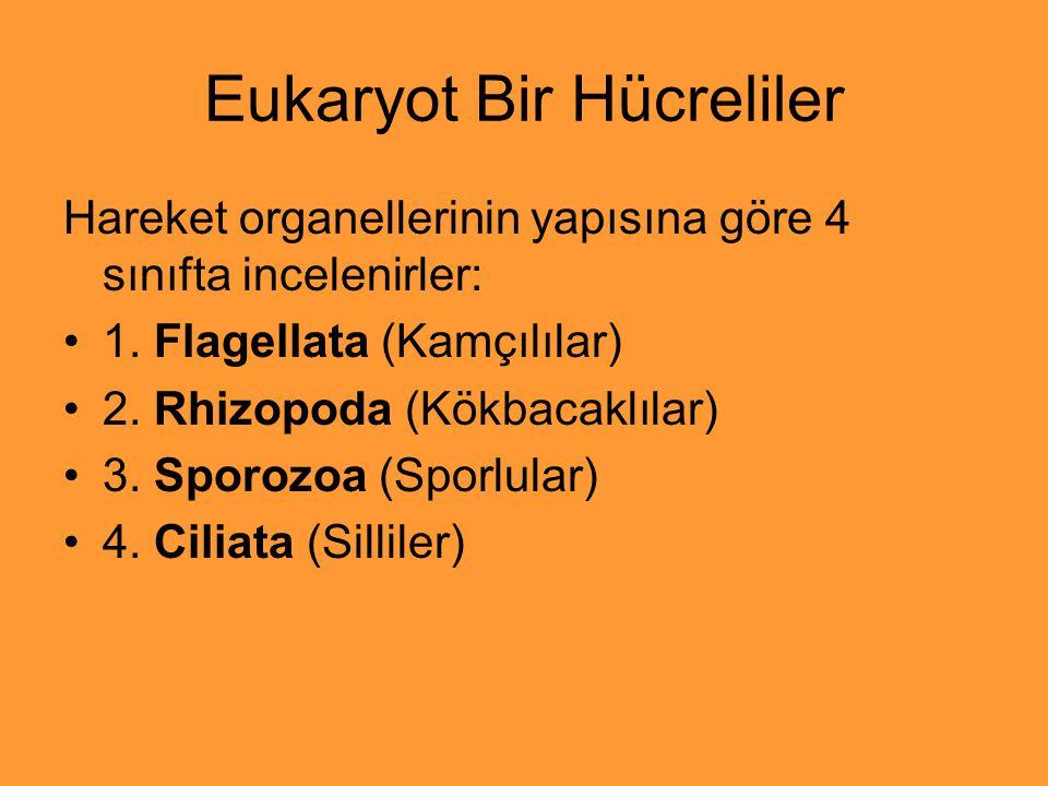 Eukaryot Bir Hücreliler