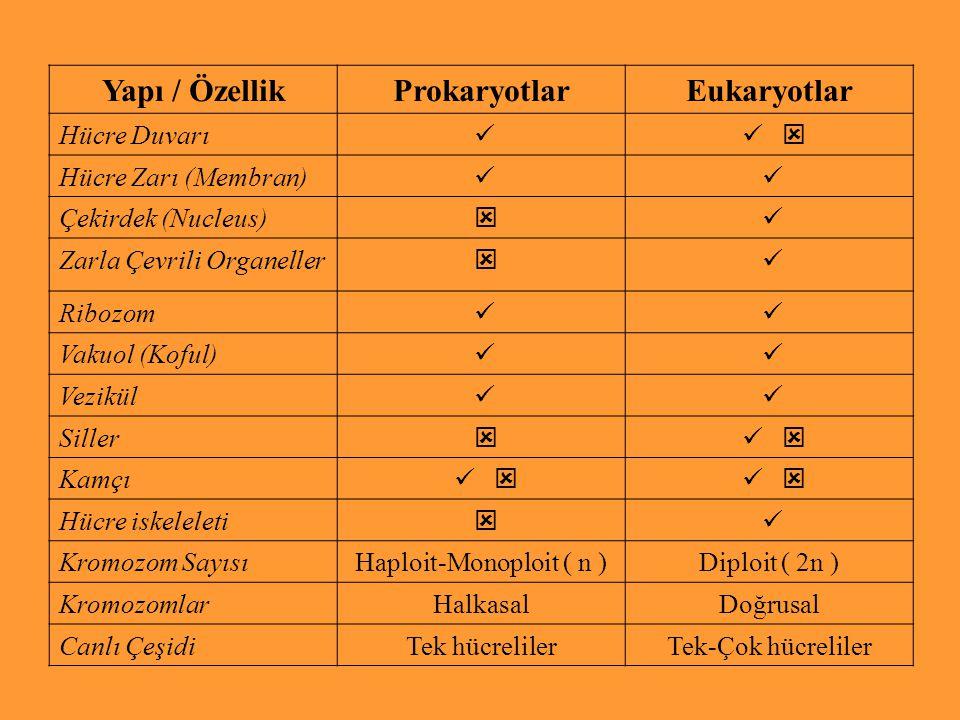Haploit-Monoploit ( n )