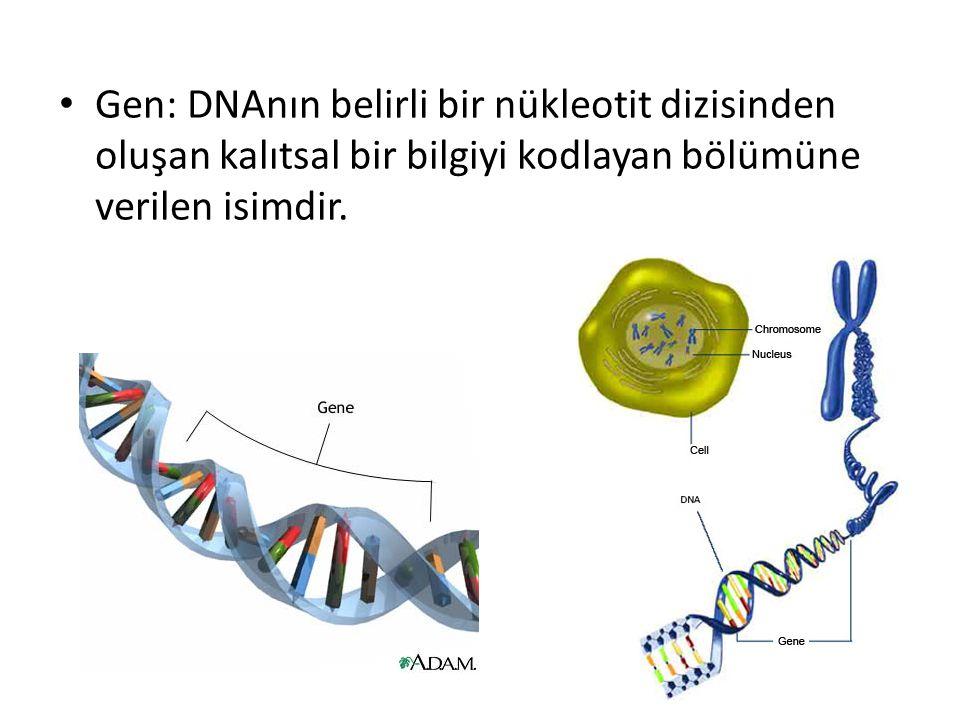 Gen: DNAnın belirli bir nükleotit dizisinden oluşan kalıtsal bir bilgiyi kodlayan bölümüne verilen isimdir.