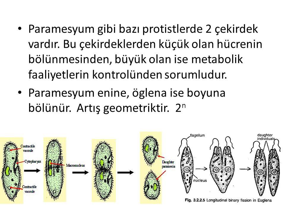 Paramesyum gibi bazı protistlerde 2 çekirdek vardır