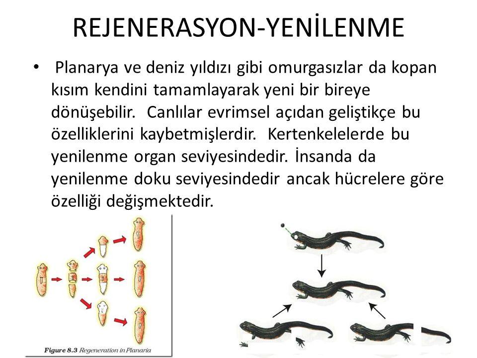 REJENERASYON-YENİLENME