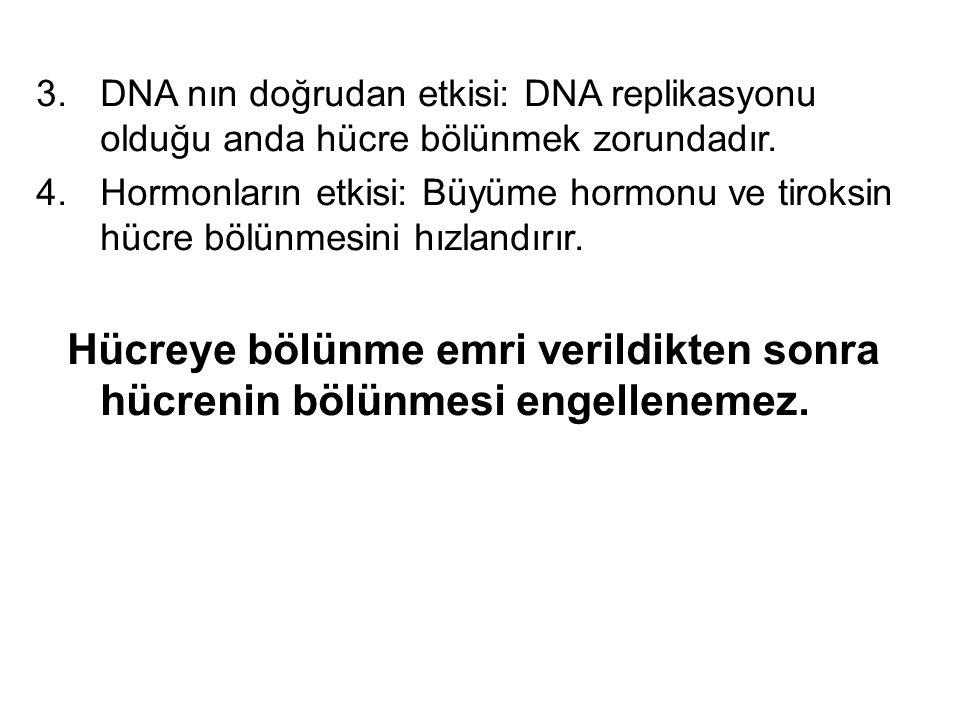 DNA nın doğrudan etkisi: DNA replikasyonu olduğu anda hücre bölünmek zorundadır.