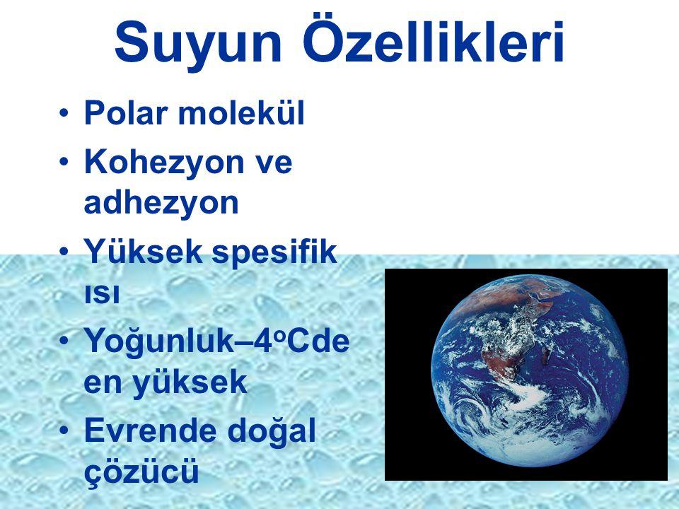 Suyun Özellikleri Polar molekül Kohezyon ve adhezyon
