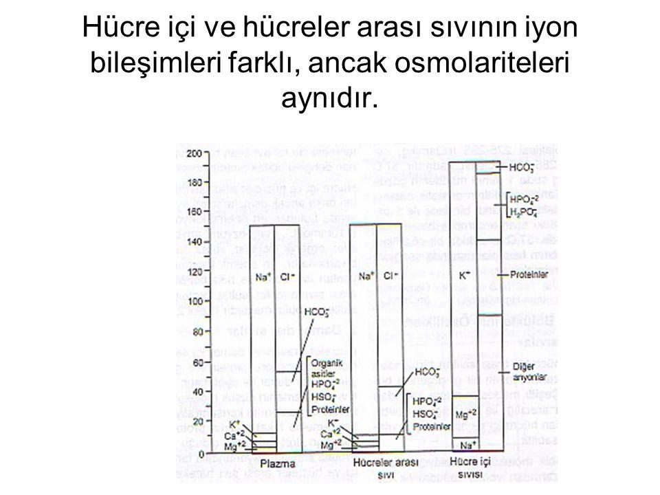 Hücre içi ve hücreler arası sıvının iyon bileşimleri farklı, ancak osmolariteleri aynıdır.