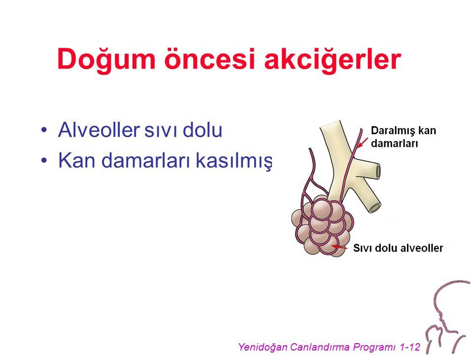 Doğum öncesi akciğerler