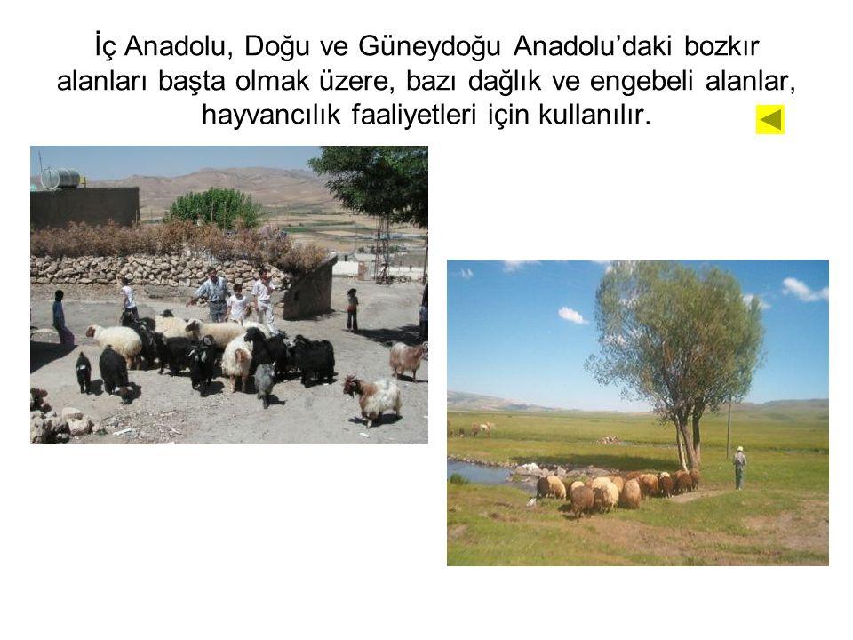 İç Anadolu, Doğu ve Güneydoğu Anadolu'daki bozkır alanları başta olmak üzere, bazı dağlık ve engebeli alanlar, hayvancılık faaliyetleri için kullanılır.