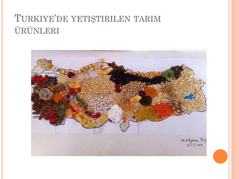Turkiye'de yetiştirilen tarim ürünleri