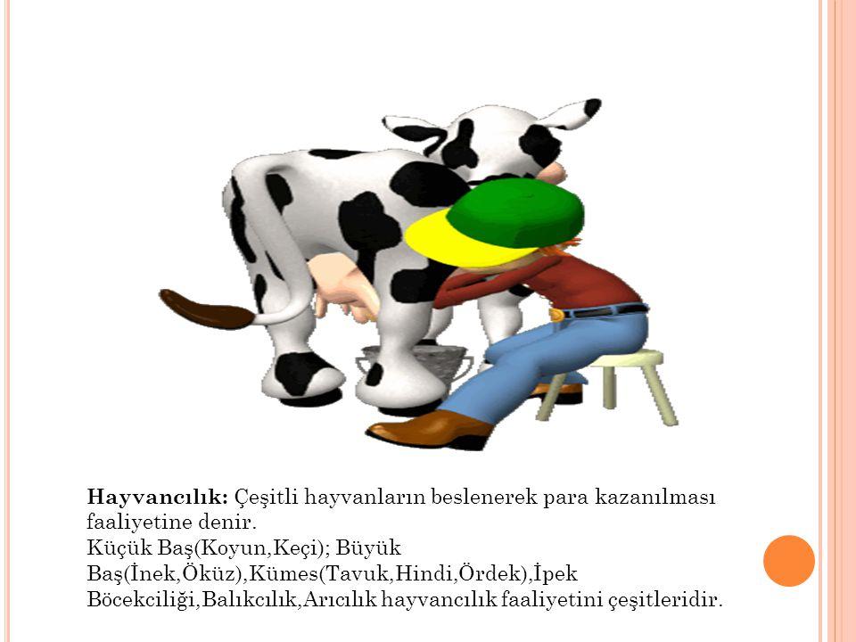 Hayvancılık: Çeşitli hayvanların beslenerek para kazanılması faaliyetine denir.
