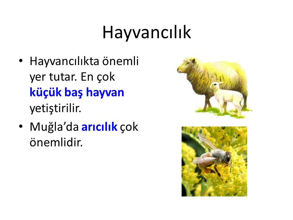 Hayvancılık Hayvancılıkta önemli yer tutar. En çok küçük baş hayvan yetiştirilir.