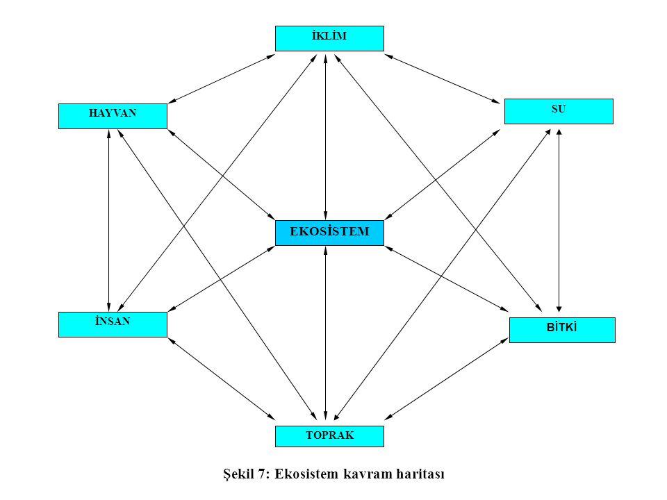Şekil 7: Ekosistem kavram haritası