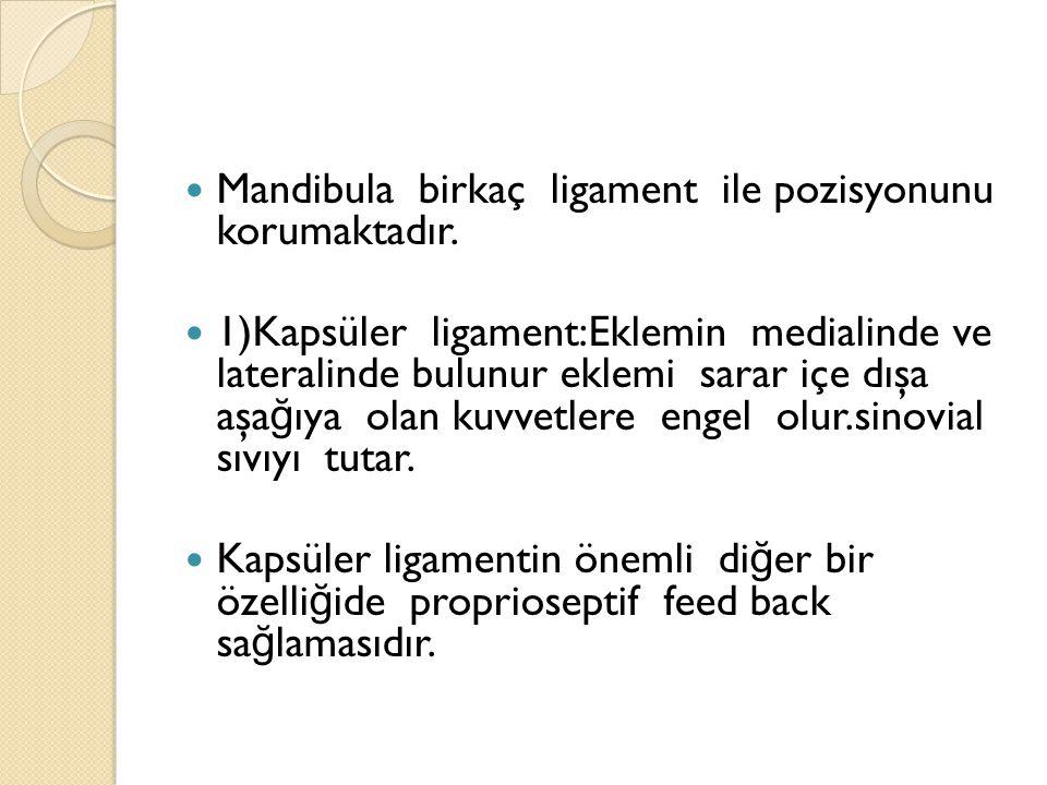 Mandibula birkaç ligament ile pozisyonunu korumaktadır.