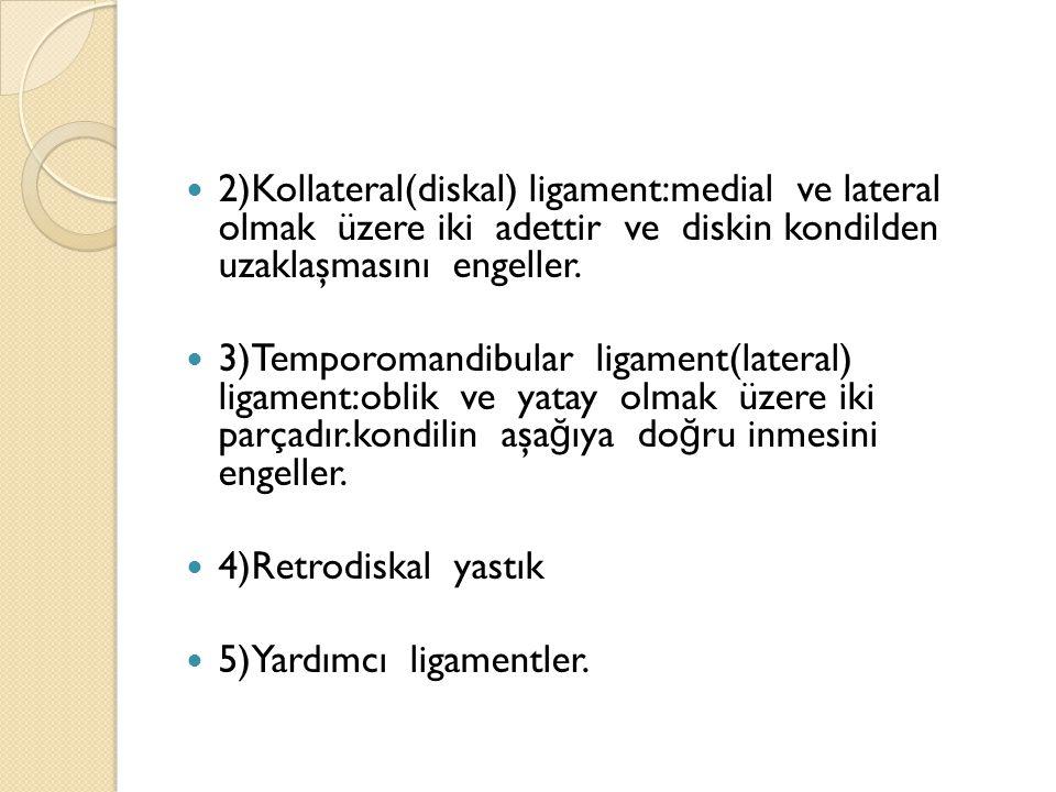 2)Kollateral(diskal) ligament:medial ve lateral olmak üzere iki adettir ve diskin kondilden uzaklaşmasını engeller.