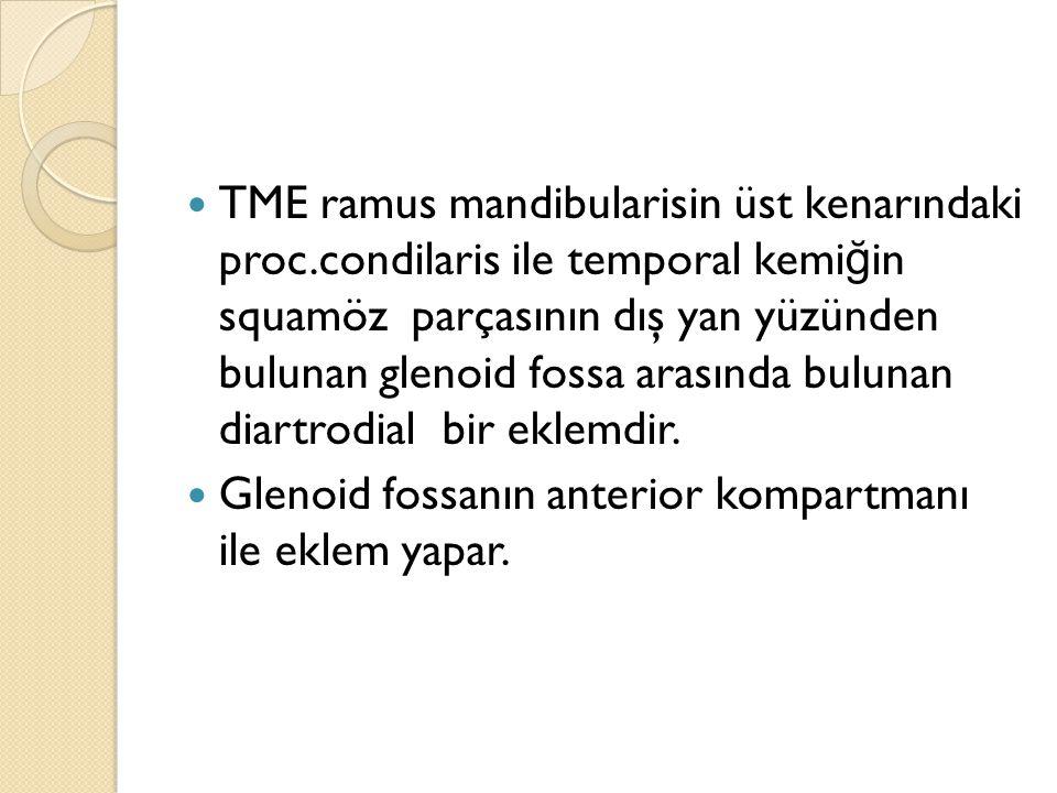 TME ramus mandibularisin üst kenarındaki proc