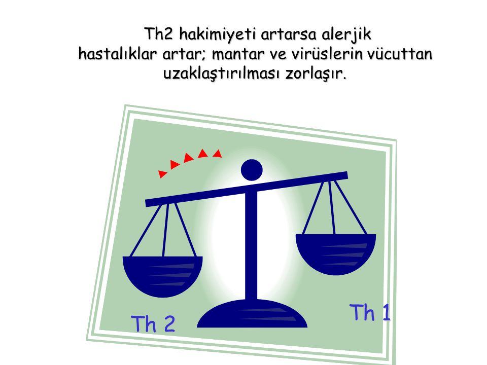 Th 1 Th 2 Th2 hakimiyeti artarsa alerjik