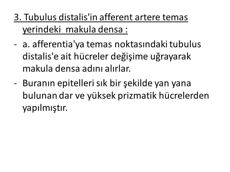 3. Tubulus distalis in afferent artere temas yerindeki makula densa :