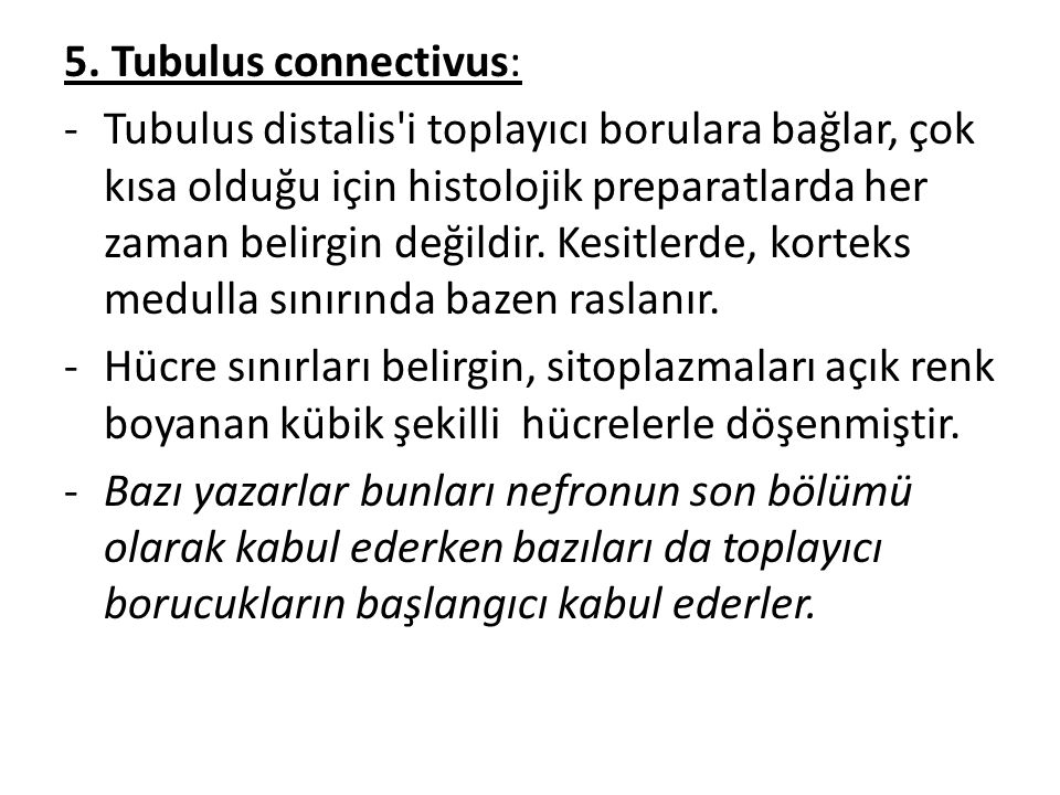 5. Tubulus connectivus: