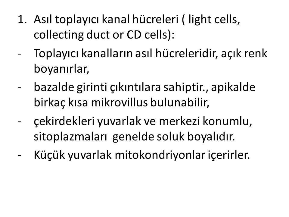 Asıl toplayıcı kanal hücreleri ( light cells, collecting duct or CD cells):
