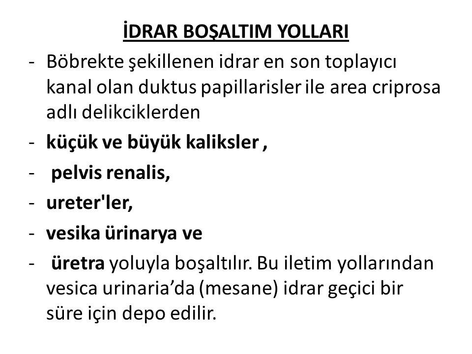 İDRAR BOŞALTIM YOLLARI