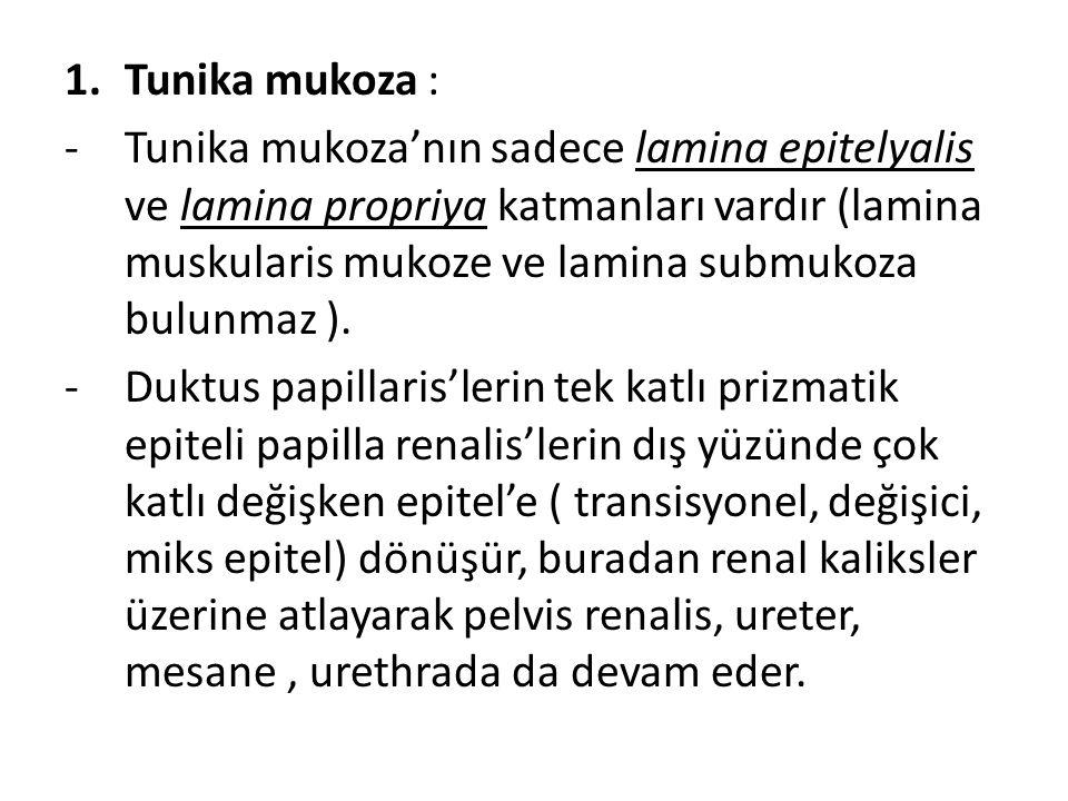 Tunika mukoza :