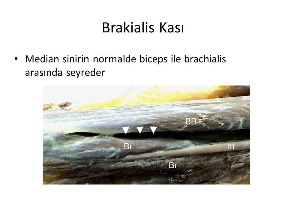 Brakialis Kası Median sinirin normalde biceps ile brachialis arasında seyreder