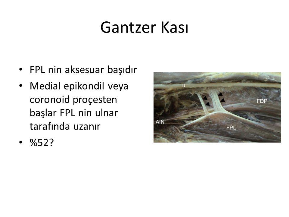 Gantzer Kası FPL nin aksesuar başıdır
