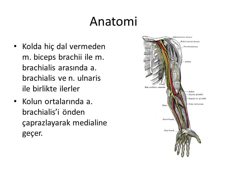 Anatomi Kolda hiç dal vermeden m. biceps brachii ile m. brachialis arasında a. brachialis ve n. ulnaris ile birlikte ilerler.