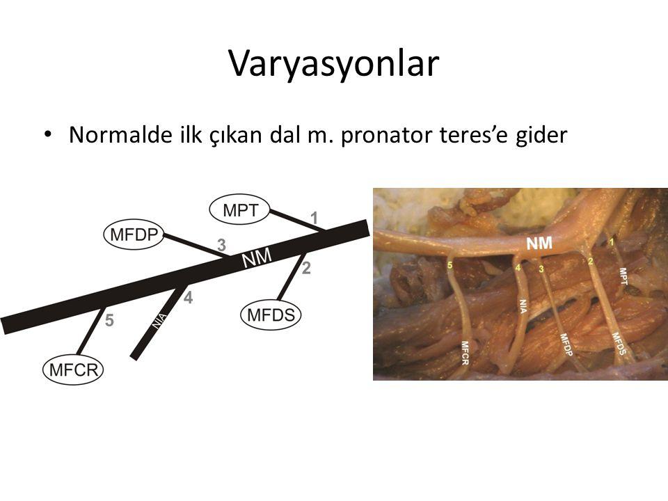 Varyasyonlar Normalde ilk çıkan dal m. pronator teres'e gider