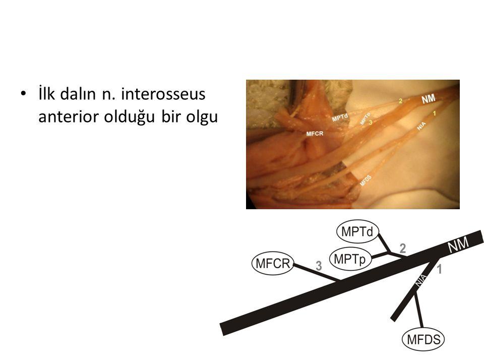 İlk dalın n. interosseus anterior olduğu bir olgu