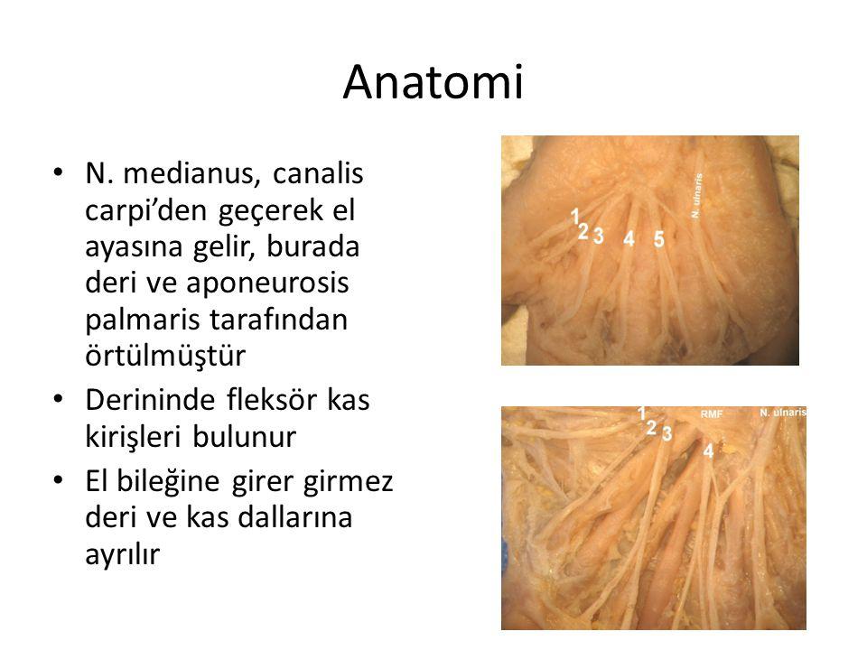 Anatomi N. medianus, canalis carpi'den geçerek el ayasına gelir, burada deri ve aponeurosis palmaris tarafından örtülmüştür.