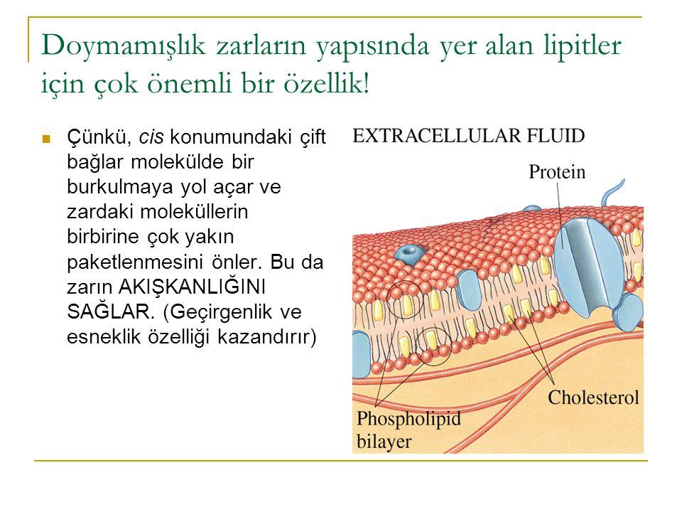 Doymamışlık zarların yapısında yer alan lipitler için çok önemli bir özellik!