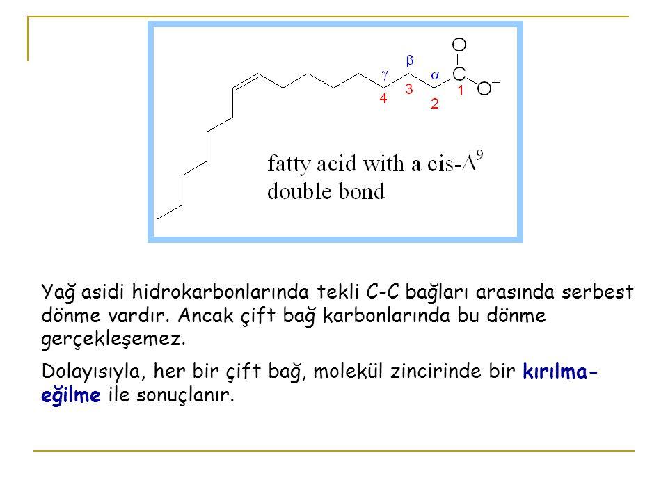 Yağ asidi hidrokarbonlarında tekli C-C bağları arasında serbest dönme vardır. Ancak çift bağ karbonlarında bu dönme gerçekleşemez.