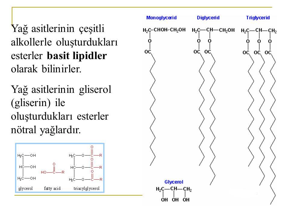 Yağ asitlerinin çeşitli alkollerle oluşturdukları esterler basit lipidler olarak bilinirler.
