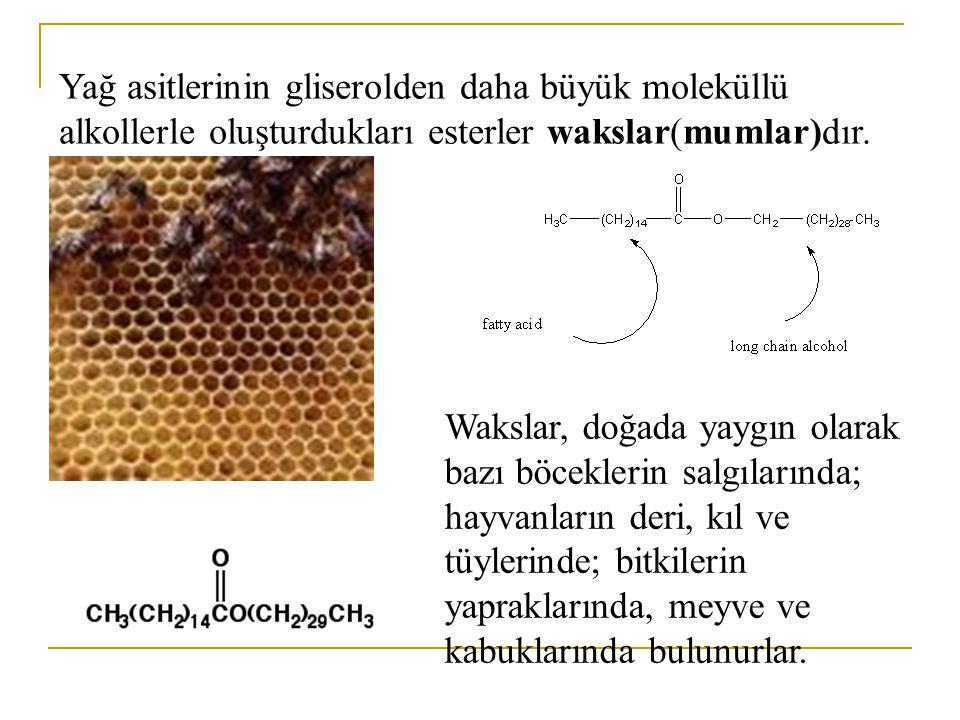 Yağ asitlerinin gliserolden daha büyük moleküllü alkollerle oluşturdukları esterler wakslar(mumlar)dır.