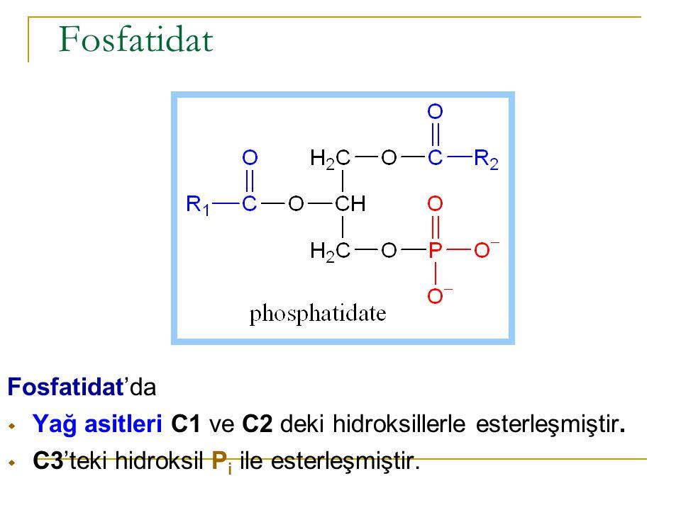 Fosfatidat Fosfatidat'da