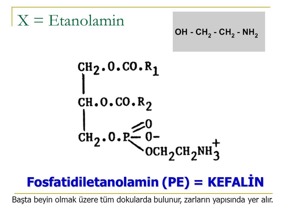 X = Etanolamin Fosfatidiletanolamin (PE) = KEFALİN