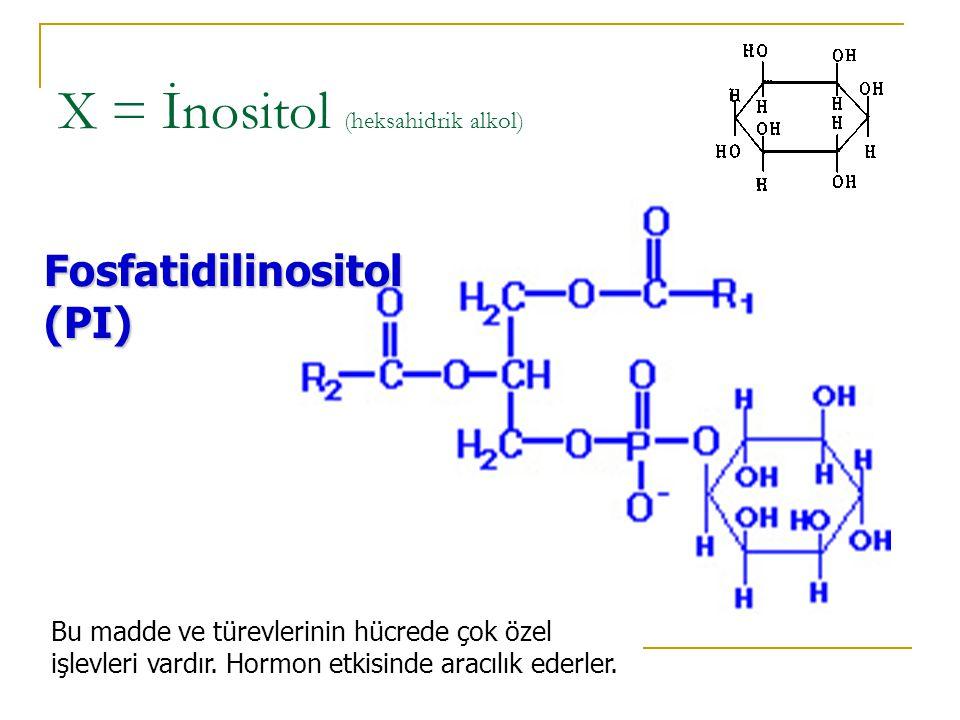 X = İnositol (heksahidrik alkol)