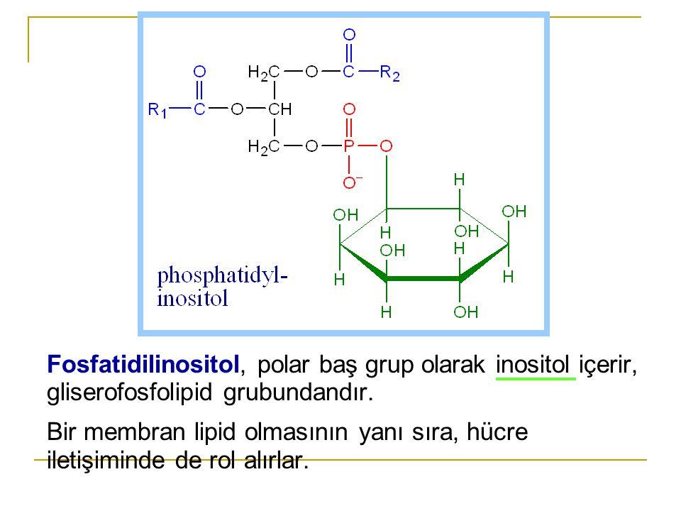 Fosfatidilinositol, polar baş grup olarak inositol içerir, gliserofosfolipid grubundandır.