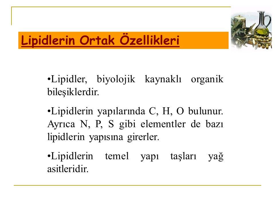 Lipidlerin Ortak Özellikleri