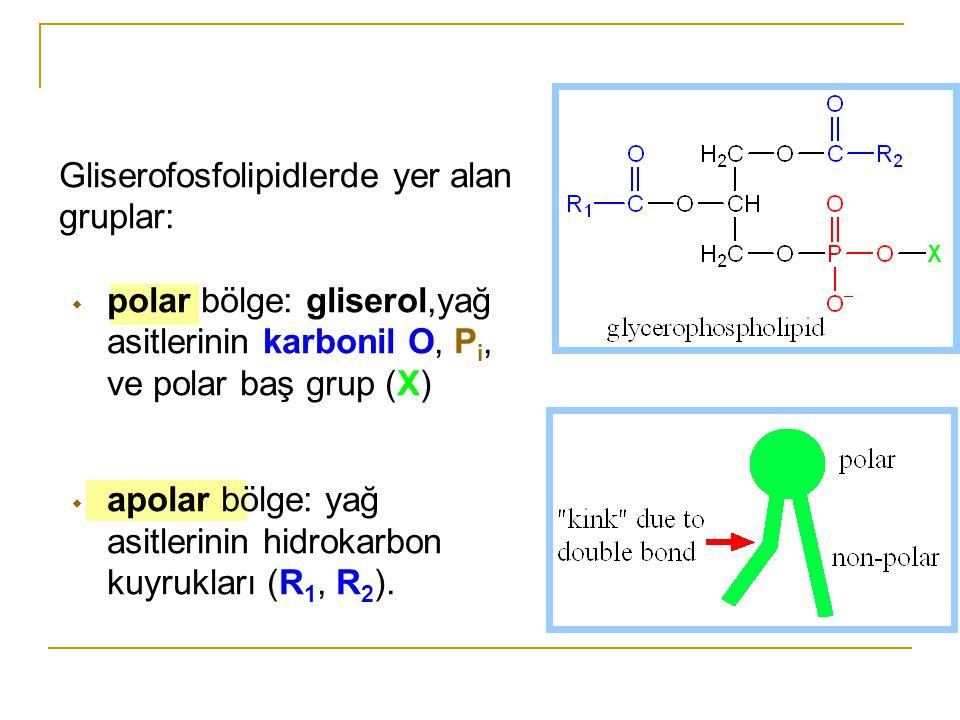Gliserofosfolipidlerde yer alan gruplar: