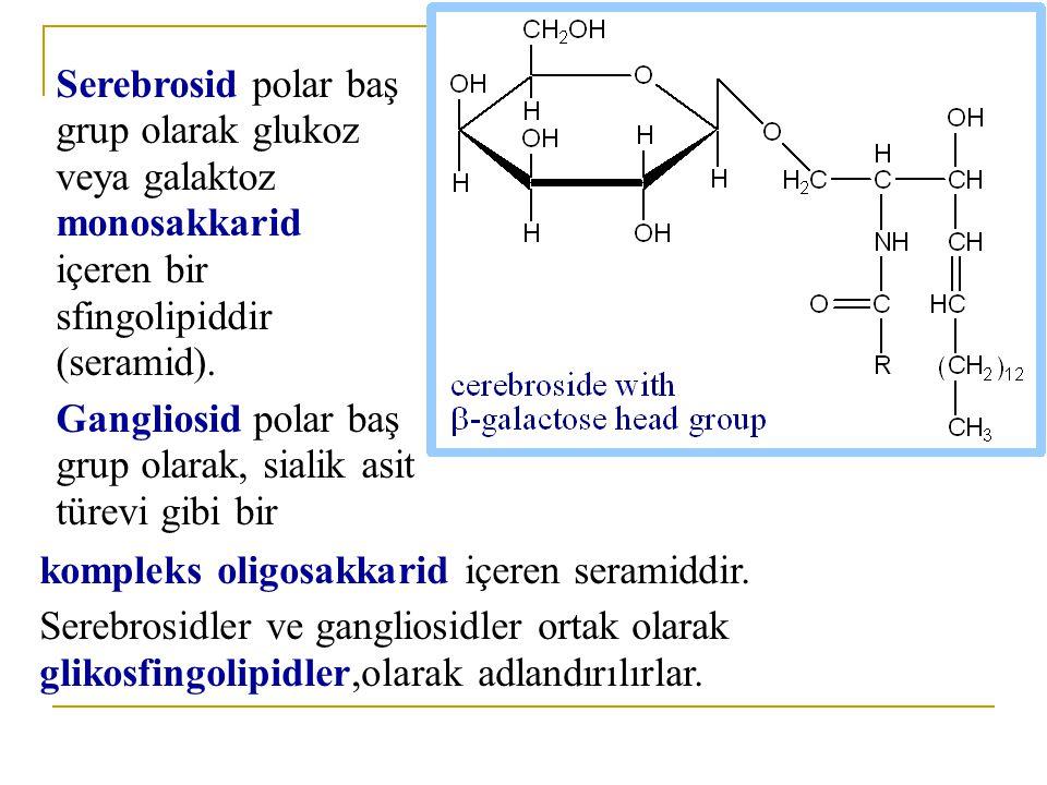 Serebrosid polar baş grup olarak glukoz veya galaktoz monosakkarid içeren bir sfingolipiddir (seramid).