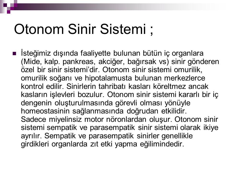 Otonom Sinir Sistemi ;