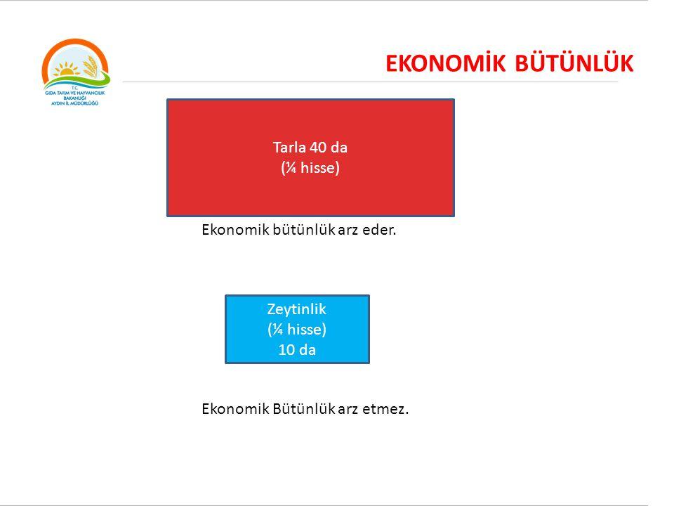 EKONOMİK BÜTÜNLÜK Tarla 40 da (¼ hisse) Ekonomik bütünlük arz eder.
