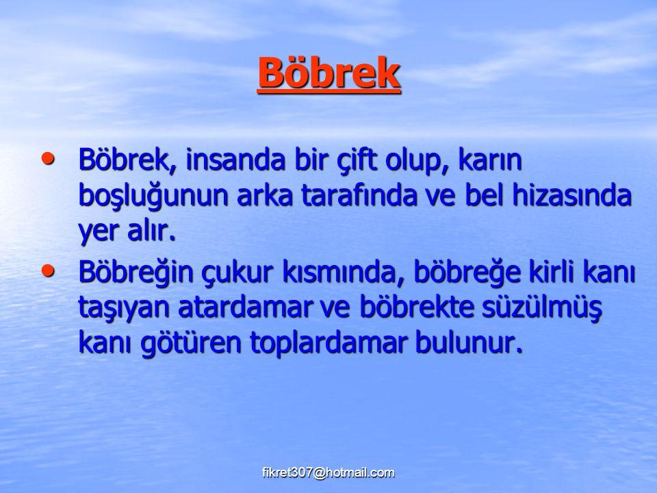 Böbrek Böbrek, insanda bir çift olup, karın boşluğunun arka tarafında ve bel hizasında yer alır.