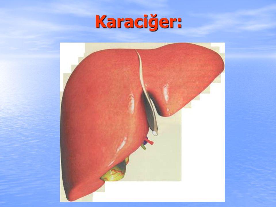 Karaciğer: fikret307@hotmail.com