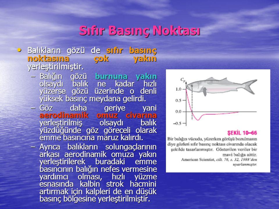 Sıfır Basınç Noktası Balıkların gözü de sıfır basınç noktasına çok yakın yerleştirilmiştir.