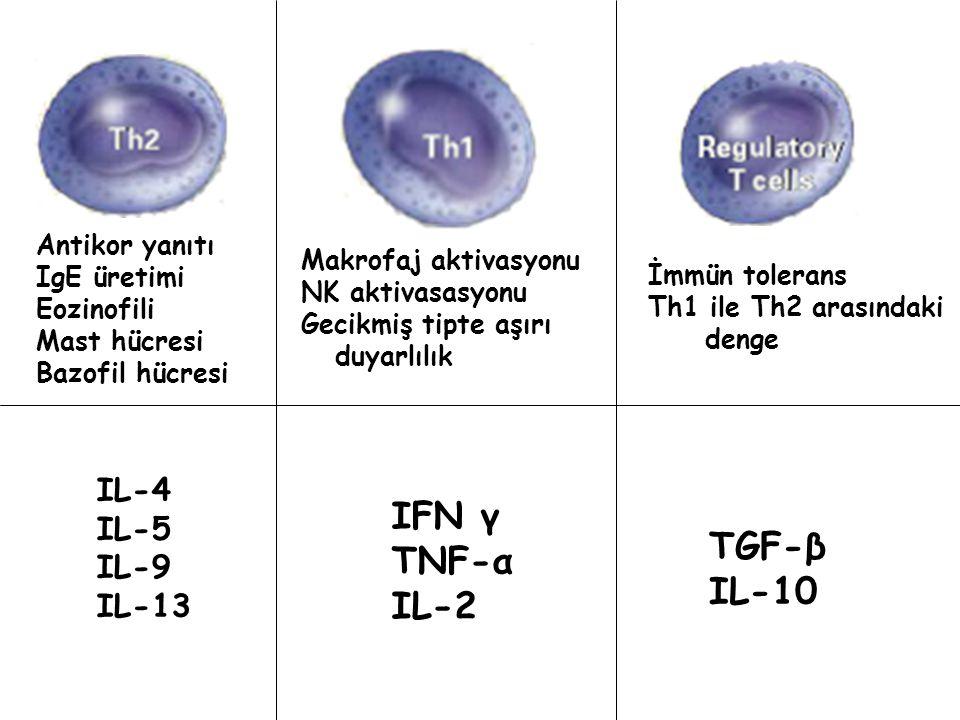IFN γ TNF-α TGF-β IL-2 IL-10 IL-4 IL-5 IL-9 IL-13 Antikor yanıtı